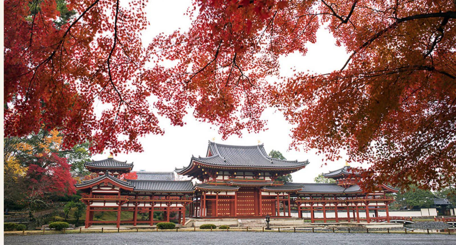 紅葉的季節整個寺院豔紅如火。圖片來源:平等院